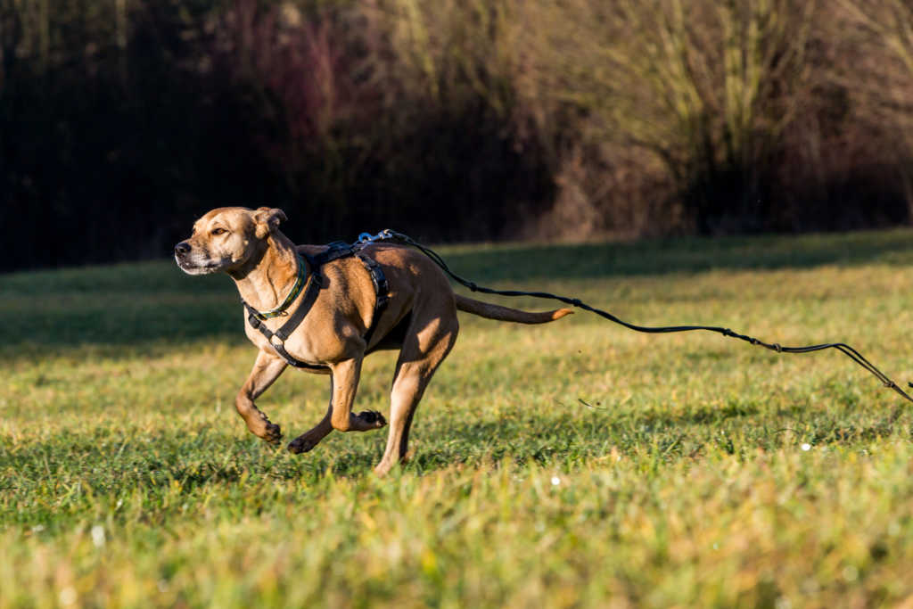 Dog-walkers: Expect theunexpected